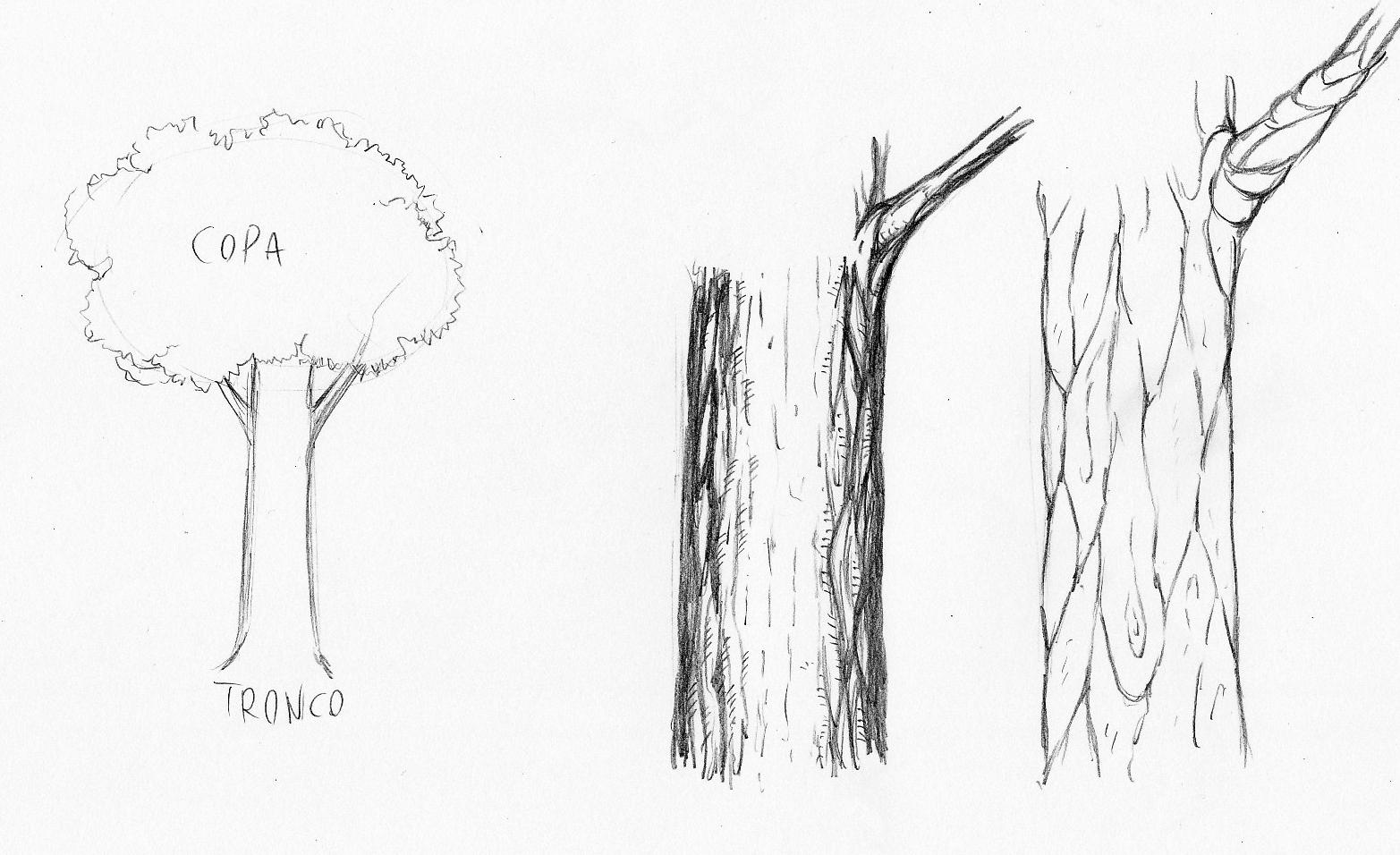 Imagens De Arvore Para Imprimir: Desenhos De Arvores Para Imprimir